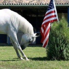 horseandflag