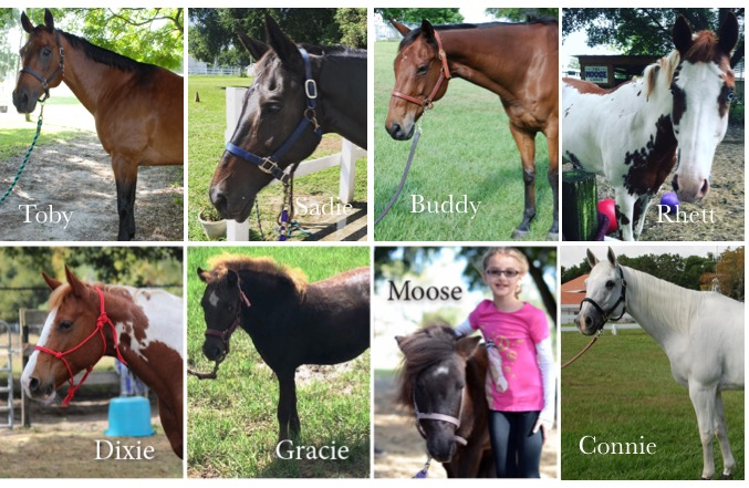 Crossroads Corral Horse Collage Pic