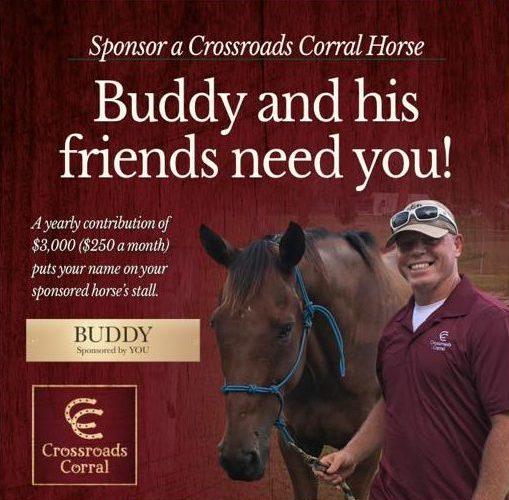 horse-sponsorship-pic