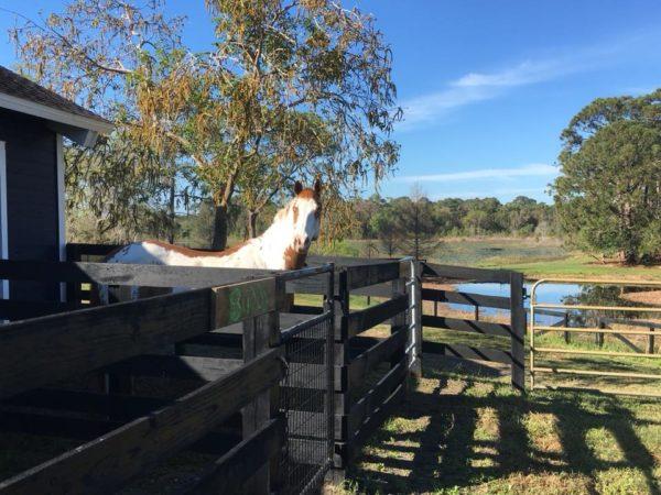 Rhetts View
